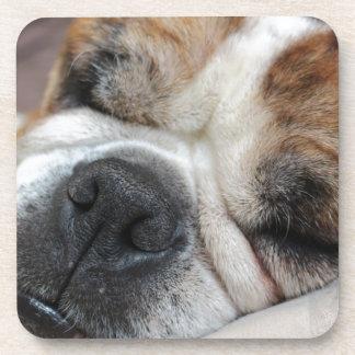 Sleeping Dog Beverage Coasters