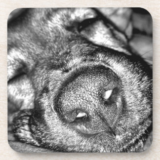 Sleeping dog coaster