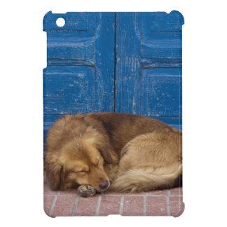 Sleeping dog, Essaouira, Morocco iPad Mini Case