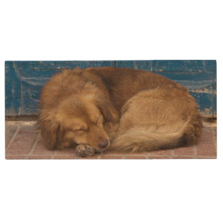 Sleeping dog, Essaouira, Morocco