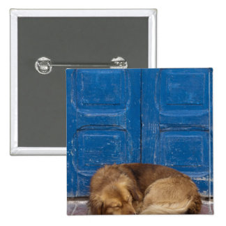 Sleeping dog, Essaouira, Morocco Pinback Button