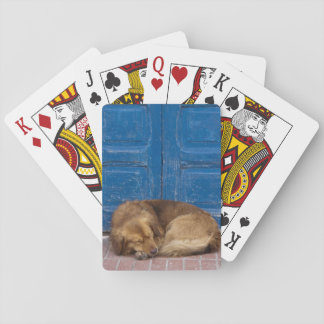 Sleeping dog, Essaouira, Morocco Playing Cards