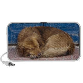 Sleeping dog, Essaouira, Morocco Portable Speaker