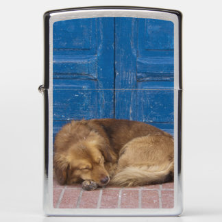 Sleeping dog, Essaouira, Morocco Zippo Lighter