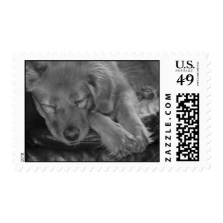 Sleeping Dog in Black and White Postage Stamps