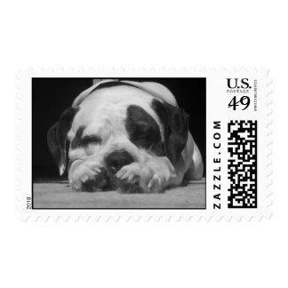 sleeping dog postage