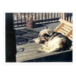 Sleeping_Dog Postcard