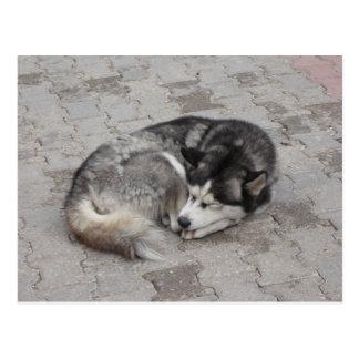 Sleeping Dog Postcard