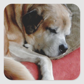 Sleeping Dog Square Sticker