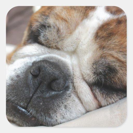 Sleeping Dog Stickers