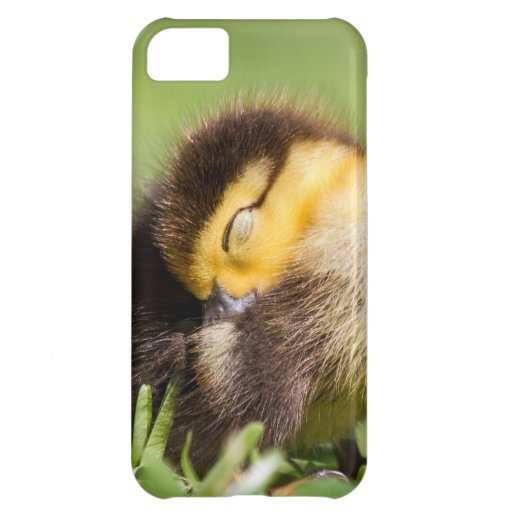 Sleeping Duck Cover For iPhone 5C