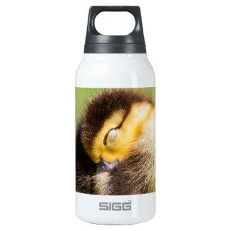 Sleeping Duck Insulated Water Bottle