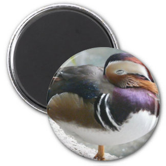 sleeping duck magnet