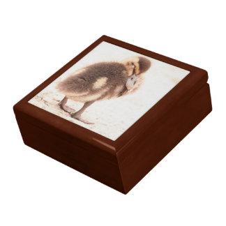 Sleeping Duckling Duck Bird Wildlife Gift Box