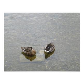 Sleeping Ducks Card