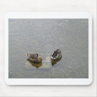 Sleeping Ducks Mouse Pad