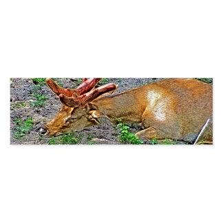 Sleeping Eld's Deer at the Zoo Painting Business Card