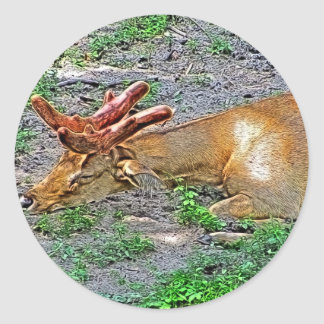 Sleeping Eld's Deer at the Zoo Painting Classic Round Sticker
