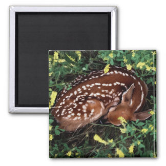 Sleeping Fawn Magnet