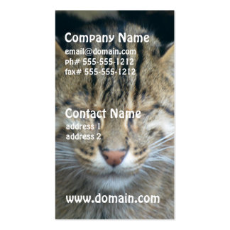 Sleeping Fishing Cat Double-Sided Standard Business Cards (Pack Of 100)