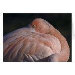 Sleeping Flamingo Card
