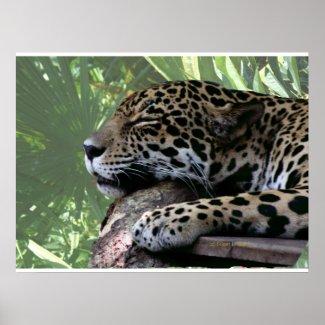 Sleeping Florida jaguar , light green frond back Print