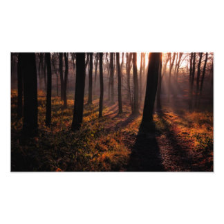 Sleeping Forest Photo Print