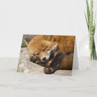 Sleeping Fox Notecard