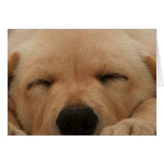Sleeping Golden Retriever Greeting Card