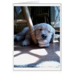 Sleeping Golden Retriever Puppy Greeting Cards