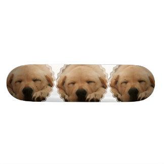Sleeping Golden Retriever Skateboard