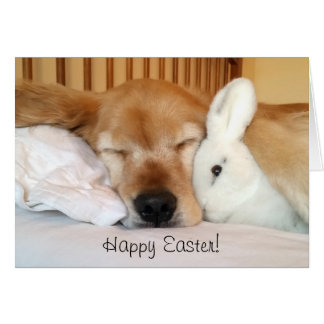 Sleeping Golden Retriever With White Easter Bunny Card