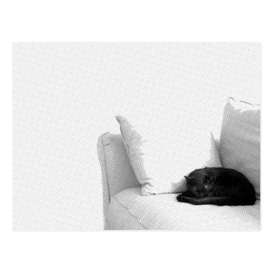 Sleeping Grey Cat on White Sofa Postcard