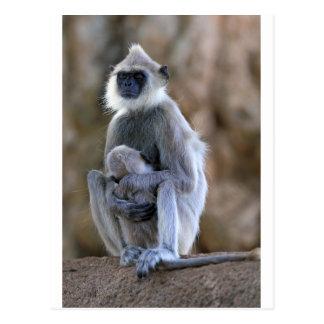 Sleeping grey Langur monkey and baby Postcard