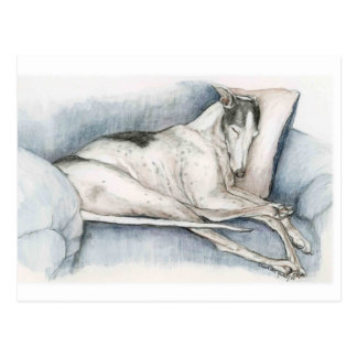 Sleeping Greyhound Dog Art Poscard Postcard