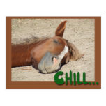 Sleeping  Horse Smile: Chill Postcard