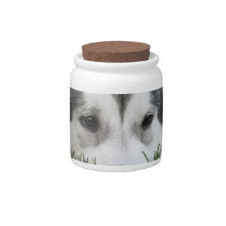 Sleeping Husky Candy Jar