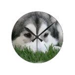 Sleeping Husky Clock