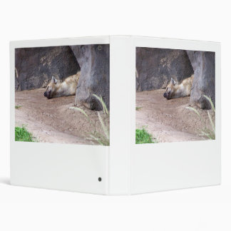 Sleeping Hyena head lying on clay ground picture Binder