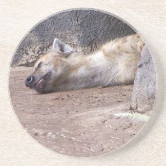 Sleeping Hyena head lying on clay ground picture Coasters