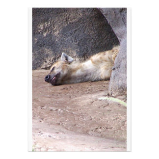 Sleeping Hyena head lying on clay ground picture Invite