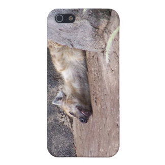 Sleeping Hyena head lying on clay ground picture iPhone SE/5/5s Case