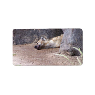 Sleeping Hyena head lying on clay ground picture Custom Address Labels