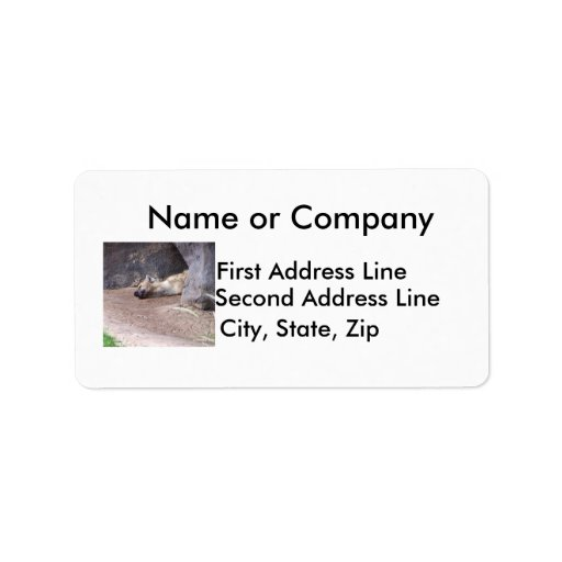 Sleeping Hyena head lying on clay ground picture Address Label