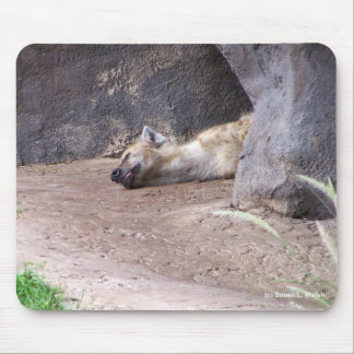 Sleeping Hyena head lying on clay ground picture Mouse Pad