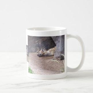 Sleeping Hyena head lying on clay ground picture Classic White Coffee Mug