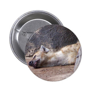 Sleeping Hyena head lying on clay ground picture Pinback Button