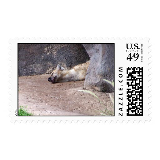 Sleeping Hyena head lying on clay ground picture Stamps