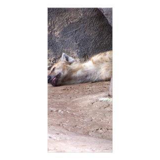 Sleeping Hyena head lying on clay ground picture Rack Card