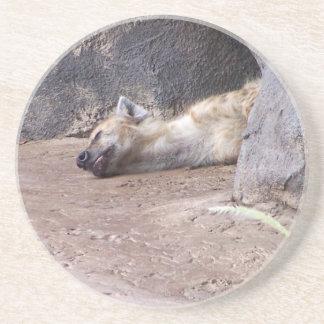 Sleeping Hyena head lying on clay ground picture Sandstone Coaster